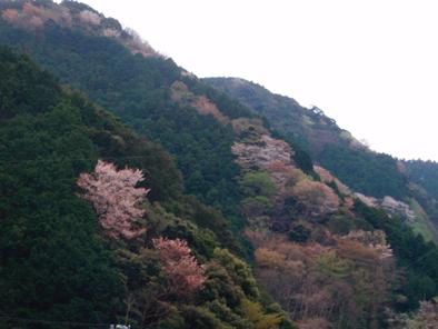 hanayakayamagabu201004.jpg