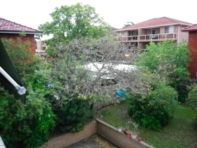 shidoninoniwa2010101.jpg