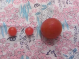 tomato2010073.jpg